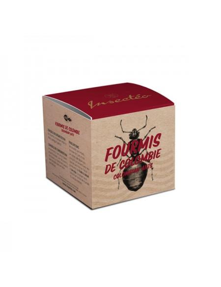 Fourmis de Colombie hormigas culonas